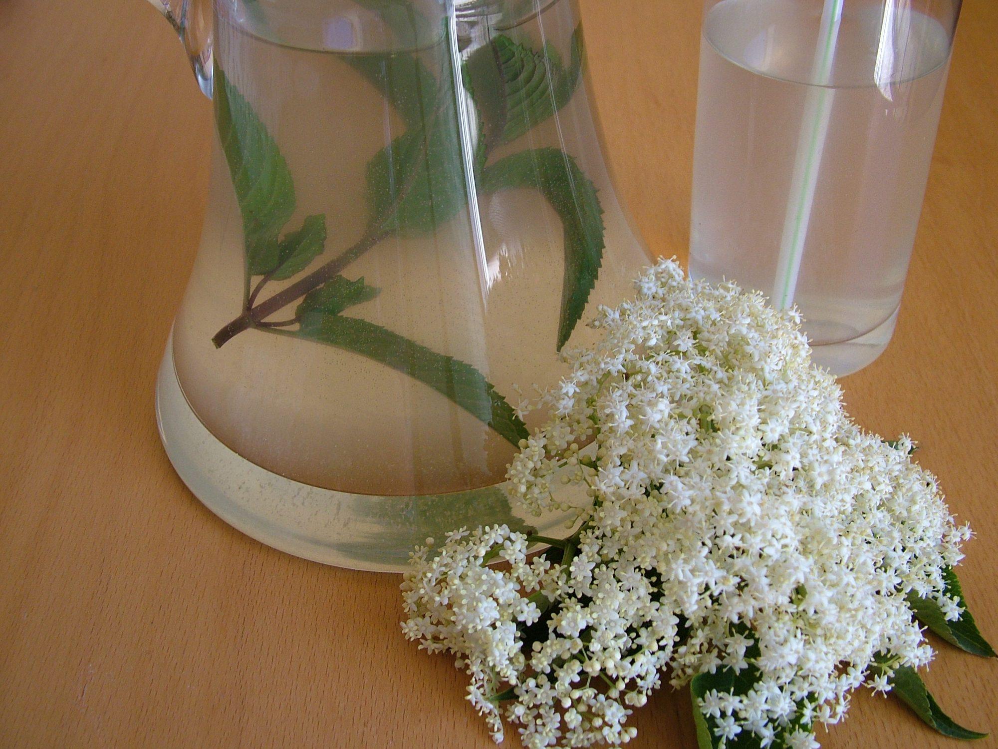 Bazový sirup – Domáca bazová malinovka